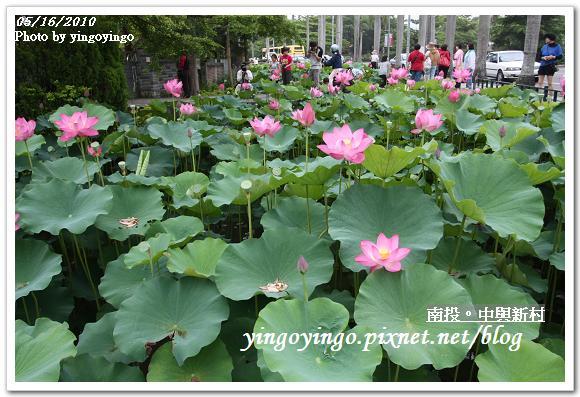 中興新村99年蓮花I2183