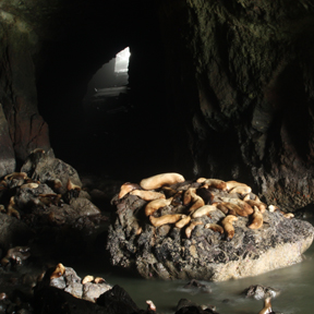Sea Lion Caves 04