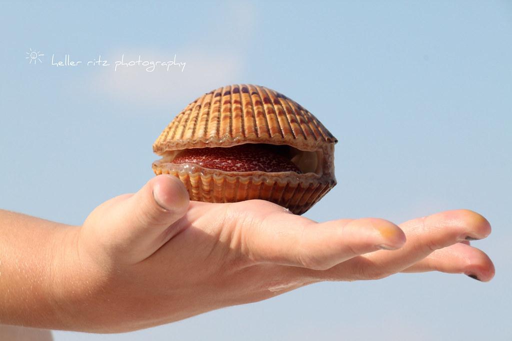 Ocean Treasures_Large Clam