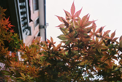 2010.05.16 上海·靜安別墅hypo cafe&shop (sylvviahsu) Tags: film minoltax370 hypo outofdate fujixtra400 roll59 seagull24mmf28