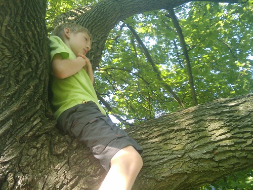 Treetop chillin'