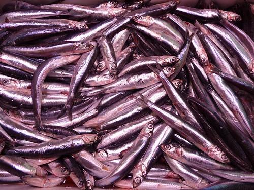 Epicuriosa, photos, Mariana Cotlear, sardines