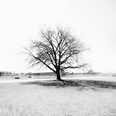 Calm (hans jesus wurst) Tags: blackandwhite bw tree square calm overexposed canoneos400d kzsachsenhausen naziconcentrationcamp sigma1020mm1456dchsm hansjesuswurst moritzhaase