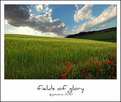 fields of glory (jesuscm) Tags: flowers red sky flores verde green clouds rojo nikon  cielo nubes poppies fields cereals cereales campos amapolas specialtouch colorphotoaward saariysqualitypictures jesuscm magicunicornverybest magicunicornmasterpiece magiayfotografia