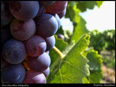 For a good red wine (Demodragon) Tags: mxico vineyard via wine zacatecas parra ojocaliente pastora uvasuva