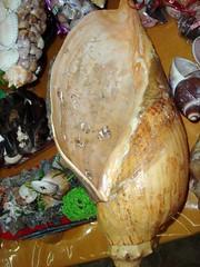 Caramujo Amarelo (Fundo do Mar) Tags: de artesanato feira conchas presentes caramujos