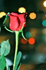 Bokeh Rose 2 (Mendosa) Tags: red flower rose bokeh nikond70s longstem mendosa 50mmf14d june2010