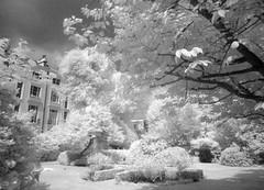 Arundel & Elgin Communal Garden (Matt Brock ) Tags: trees houses blackandwhite london monochrome grass gardens garden ir mono aperture infrared hedges digitalinfrared opengardens hoyar72 opengardensquaresweekend opengardensquares ixus870is arundelelgincommunalgarden