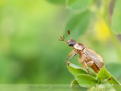 Beetle Pose 3