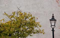 2010-10-03-Fredriksdal_0115