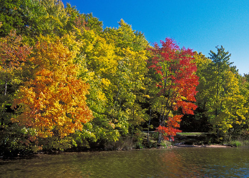 The United States Department of Agriculture, U. S. Forest Service offers an evolving living painting of color during the fall. North, South, East or West the National Forests are a great natural resource to be enjoyed.