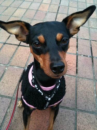 散歩なう。今日の黒犬。