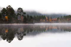 Misty reflection, Glen Affric (Kenny Muir) Tags: mist pine sunrise landscape glen scots caledonian affric