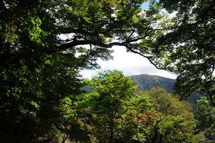尾根上より樹間に白髪山を見る