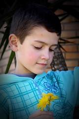 Feliz Aniversário Bernardo ♥ (Nay Hoffmann) Tags: flores azul linda criança bernardo aniversário