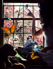They've made contact (Three less neurons per minute) Tags: dog window colors girl silhouette butterfly autum butterflies dreams fairyland robertsabuda pinktree popupbook wherethesidewalkends pinkleaves awinterstale dogsilhouette sittingbythewindow girlsilhouette niunidadphotography plightofthebutterflies butterflyperchedondog