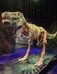 T-Rex by Lego artist Nathan Sawaya (mharrsch) Tags: skeleton dinosaur trex tyrannosaurusrex lego sculpture art nathansawaya artofthebrick exhibit omsi oregonmuseumscienceandindustry oregon mharrsch