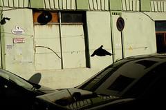 #9 (Alexei Yuriev) Tags: fujifilm fuji fujifilmru streetphotography georgia грузия батуми batumi street bird abstract color minimalism