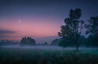 Fog - Stiller Abend