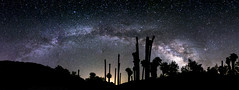 Milky Way Arch Above Palm Trees at Corn Springs (slworking2) Tags: california unitedstates us desert springs palms palmtree silhouette night nighttime nightsky milkyway galaxy cornsprings coloradodesert