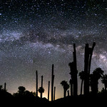 Milky Way Arch Above Palm Trees at Corn Springs thumbnail