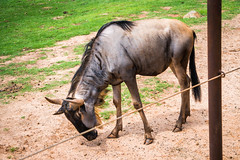 1-00971 (samschuvart) Tags: zoo animals wild fun adventure photography photographer photoshoot park exposure lightroom lens samschuvart sonya6300 sony sunlight state sunshine shoot sky safari rare a6300 atl atlanta art camera mirrorless