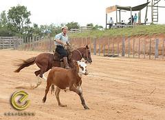 IMG_5836 (Edu Rickes) Tags: brazil horses brasil caballos cow cavalos rs riograndedosul sul tradicionalismo rodeio gachos beautifulshots piratini gineteada brazilianphotographers fotgrafosbrasileiros tirodelao todososdireitosreservados fotgrafosgachos culturagacha edurickes belasimagens southofbrasil edurickesproduesfotogrficas copyright2010 fotografiaslegais