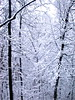 Winter Wonderland in My Back Yard #2 (Wandering the World in Magic Places) Tags: trees winter snow nature forest nikon d70 winterwonderland chinalostandfound