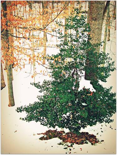 Tree in Back