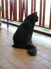 Rafa (Luca Nonato) Tags: black cat blackcat chat noir neko gatto nero chatnoir gattonero