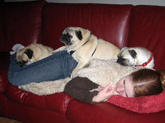 tammy with three pugs piled on