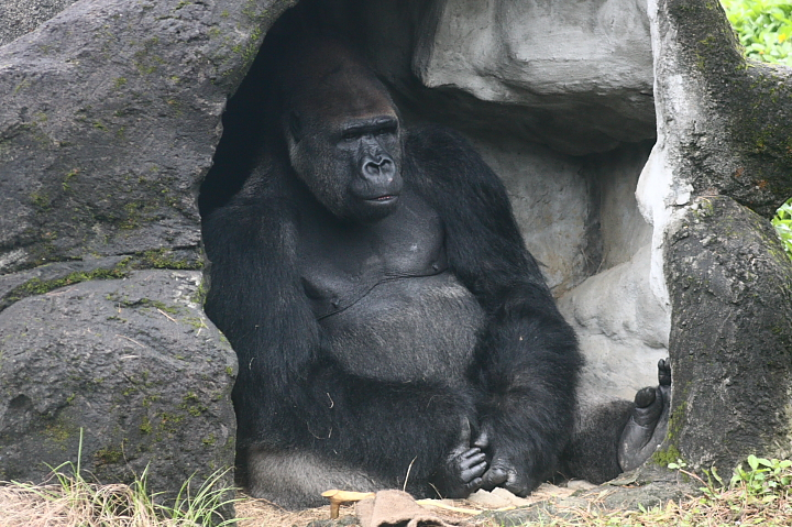 2009木柵動物園0014