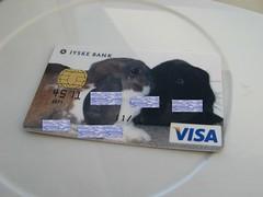 My Visa card (NerdBirdDK) Tags: marie visa hannibal