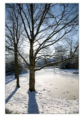 Tree by a Frozen Lake (Mark-Crossfield) Tags: pictures park uk trees winter shadow england white snow cold tree ice town frozen photo shadows northwest image photos picture scene images snowing scenes wigan photosof picturesof mesnes imagesof mesnespark markcrossfield snapsof picciesof