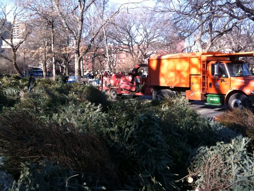 Remember Xmas Tree Graveyard?  Turns out there's mulching party in park today!   (Tompkins Square Park, NYC 10-2pm)