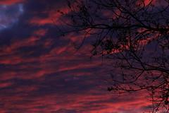 Back window sunset clouds through tree 2 (Ianmoran1970) Tags: red sky cloud tree fire ianmoran ianmoran1970