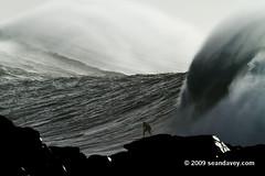 Waimea011110_0857 (Sean Davey Photography) Tags: color horizontal gold hawaii oahu northshore waimeabay goldenlight greenenergy seandavey oceanpower 011110 powerfulwaves surfnorthshore picturessurfers wavesenergy seawaveenergy oceanenergy surfbigwave bigwavesurfers biggestwaves jan10th2010