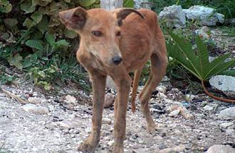 Kinship Circle - 2010-01-15 - Haiti's Animals - We Hear Their Cries, Help Is Coming 01