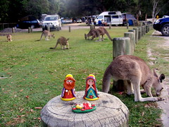 baby Jesus with the kangaroos
