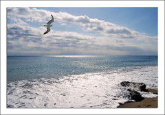 volar ... (Al Sango) Tags: mar agua nikon miami aves nubes olas gaviota roca espuma vuelo d60 sango alsango