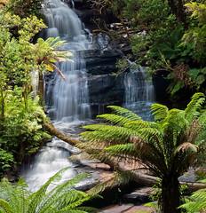 Triplet_Falls - Otway National Park (Ben D Nee) Tags: ocean road park fern waterfall great australia victoria falls filter national waterfalls nd vic triplet otway
