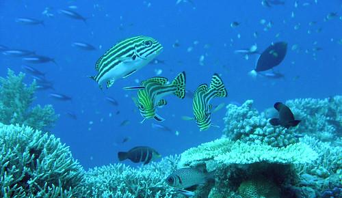Layang-Layang diving