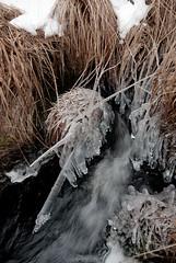 Haute Fagnes (fishtik) Tags: snow tree blackwhite zwartwit sneeuw natuur boom hogevenen hautefagnes