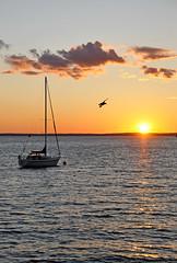 sunset boat nikon sailing novascotia seagull free dennis jarvis d300 iamcanadian frenchvillage 18200vr lighthouseroute dennisjarvis archer10 dennisgjarvis