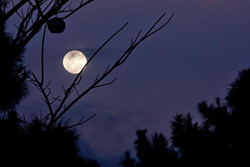 Wolf Moon (29Jan2010)