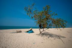 DSC_0031-2 (mehtavaibhav) Tags: beach landscape kerala alleppey