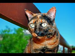 Sorry for the flash! :-( (LinoPhilippe) Tags: chile santiago cats cat nikon kitten feline chat kitty gatos gato felino katze nikkor gatto katzen kot matou chatte chaton  d60  hauskatze  felidi 1855mmf3556gvr catnipaddicts