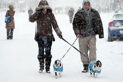 Snowstorm 8473 (Dupont Circle West) (yospyn) Tags: dogs dc snowstorm snowfall dupontcircle dogwalking 200mmf4dmicro nikond3 snowpocalypsedc february62010