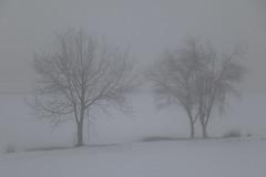 Nella nebbia e nella neve. (Guido Barberis) Tags: trees snow fog alberi canon landscape eos mark foggy natura piemonte ii neve l 5d nebbia ef paesaggio gemelli pianura foschia 24105 novarese novara padana nebbioso