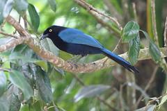 ouest du Nicaragua, Matagalpa et Selva Negra